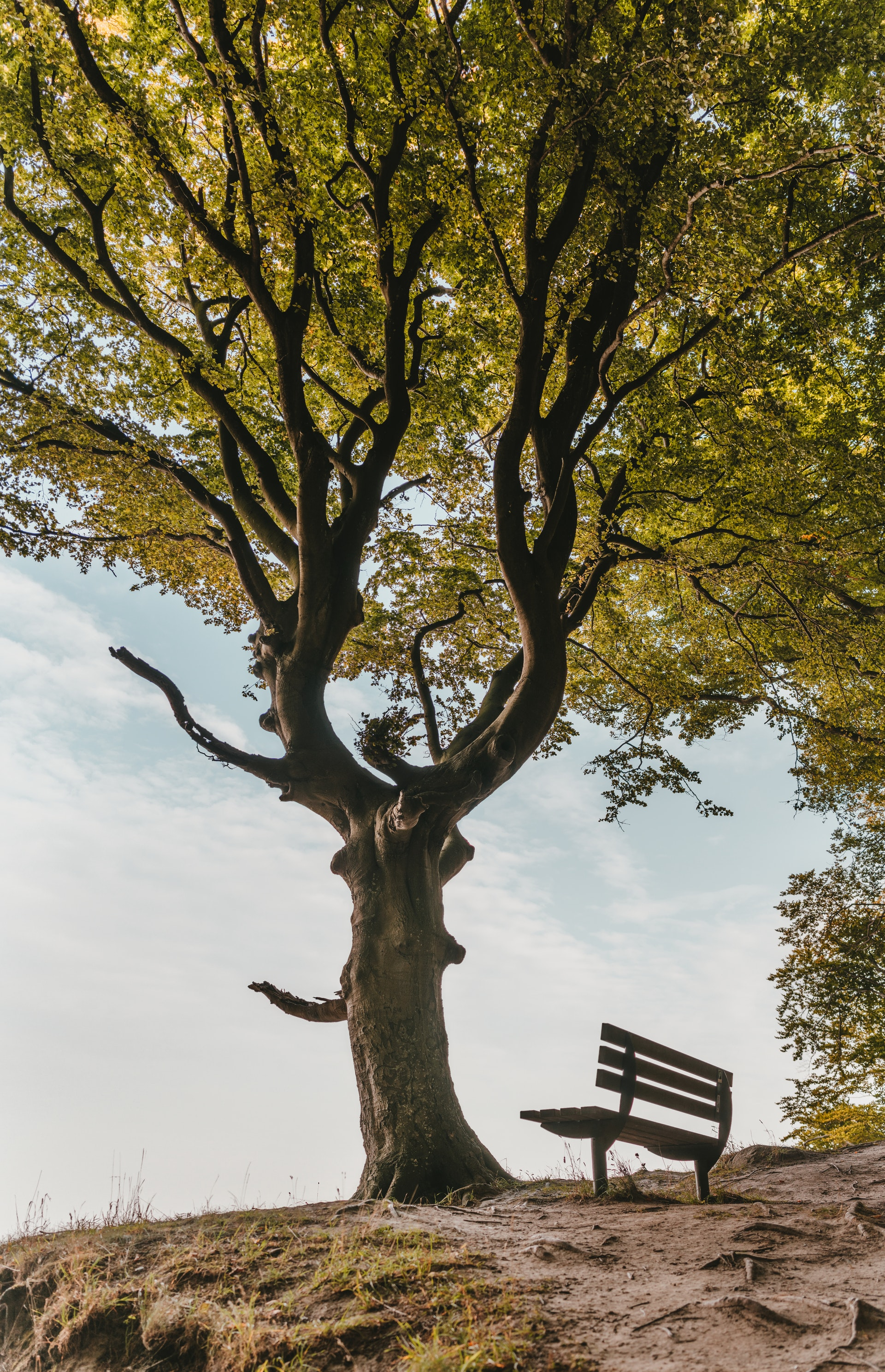 bomen1