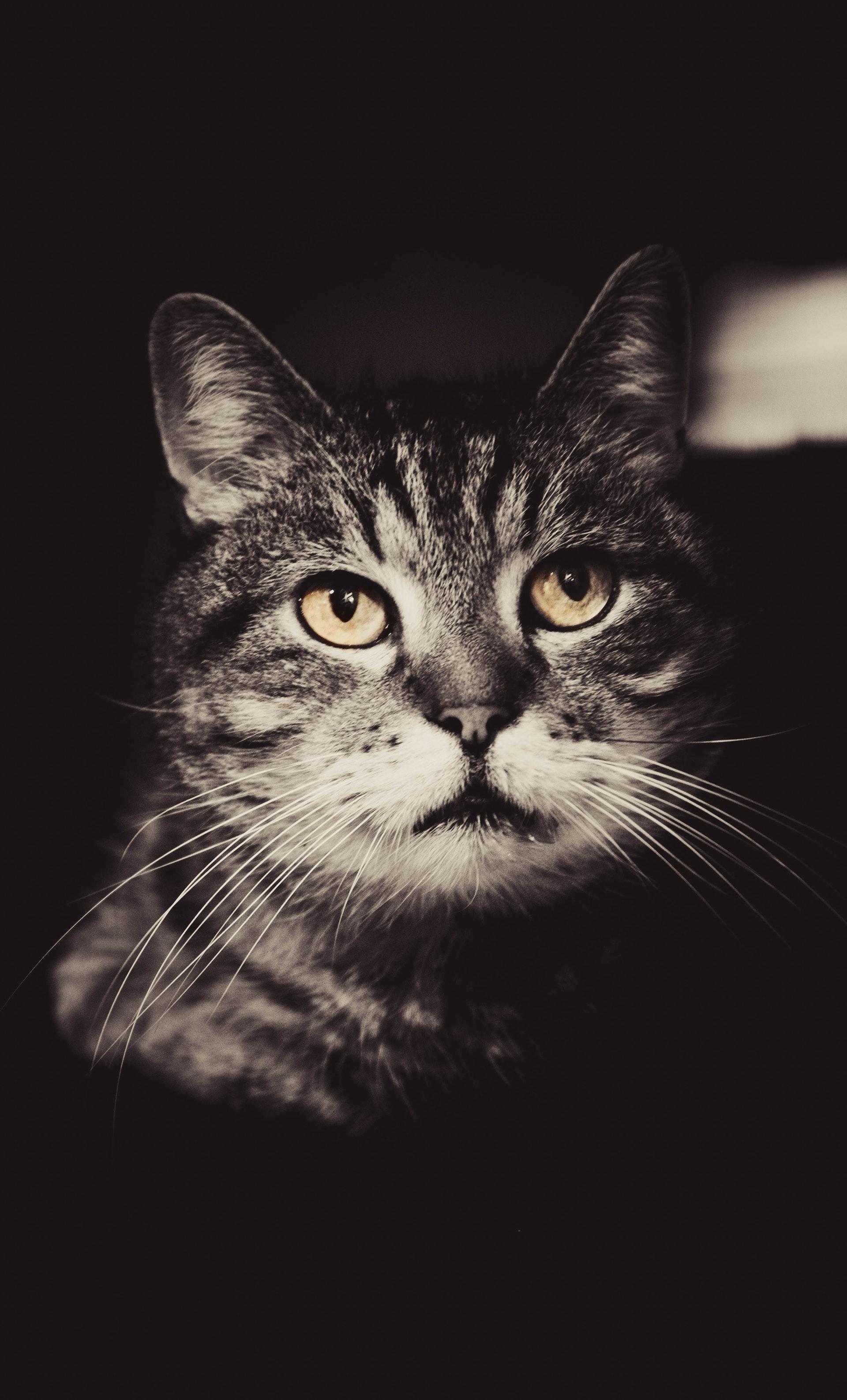 cat zwart wit
