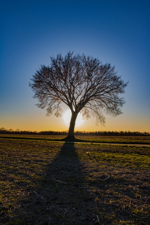 boom met zon